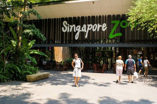 Зоопарк в Сингапуре (74 фото)