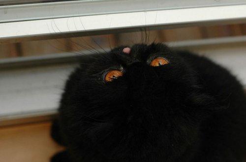 Лучшая кошка этой осени! (21 фото)