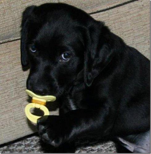 Позитивчик от собачек (45 фото)