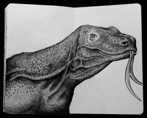 Портреты животных в карандаше Тима Джефса (26 фото)