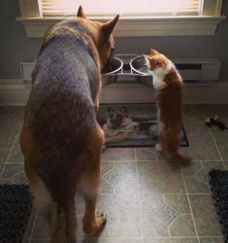Собаки и кошки в одной обложке (25 фото)