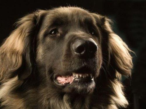 ТОП-5 невероятных способностей собак
