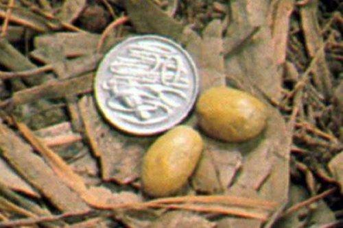 Самые необычные яйца животных (10 фото)