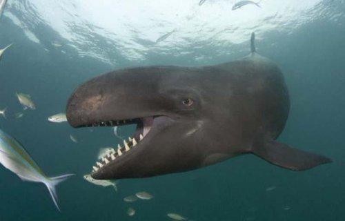 Самый добрый и забавный кит в мире (9 фото)