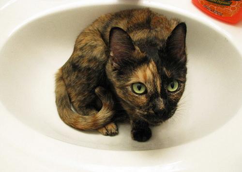 Кошки и раковины (25 фото)