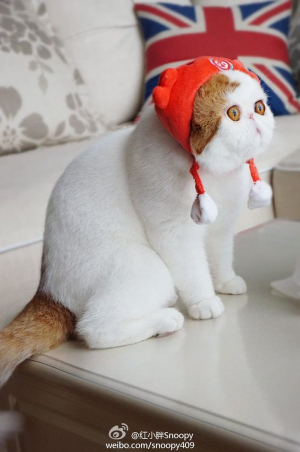 Кот снупи обои на рабочий стол