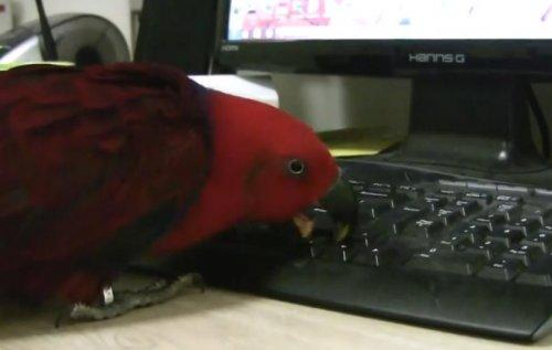 Мир животных в мире технологий