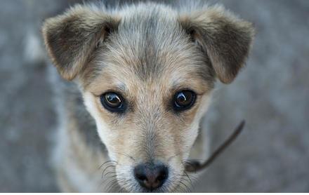 История одной собаки