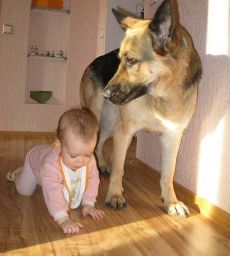 Это удивительно: маленькие дети понимают язык собак