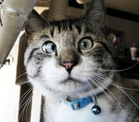 Косоглазый кот Спанглс стал звездой интернета (3 фото)