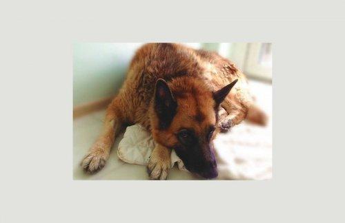 Собачья жизнь: одного из лучших саперов Латвии Джонатана Блейда бросили у ворот приюта