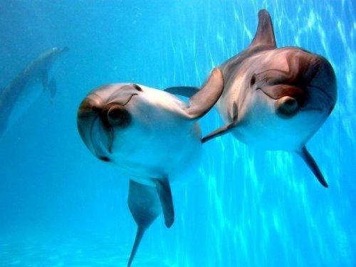 В Индии дельфинов признали личностями и запретили шоу плененных человеком дельфинов