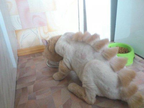 Как кот стал динозавром:) (4 фото)