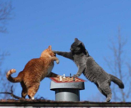 Шах и мат:) (3 фото)