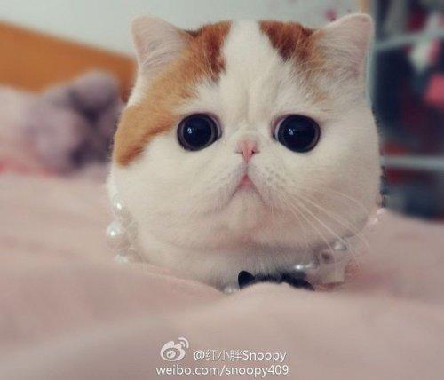Новая звезда интернета-кот Снупи (17 фото)