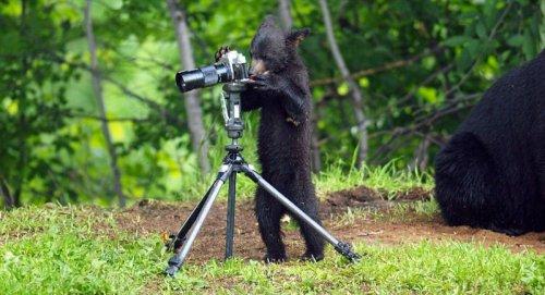 Предметы человеческого быта и медведи (15 фото)