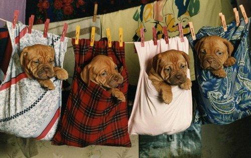 Смешные и забавные собаки (35 фото)