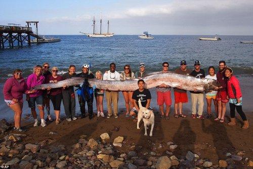 На побережье Калифорнии найдено морское чудовище (2 фото)