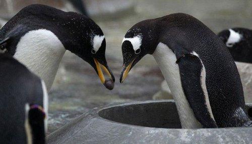 10 самых необычных фактов из мира животных (10 фото)