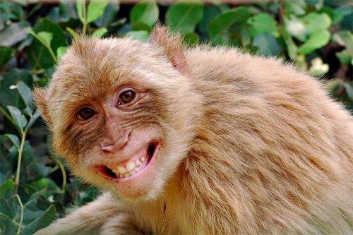 От улыбки станет всем светлей! Смеющиеся животные (11 фото)