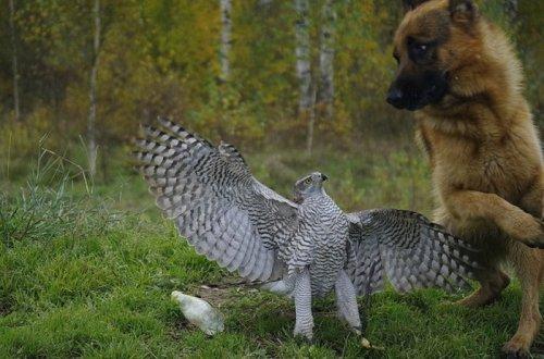 Друзья и напарники по охоте (10 фото)