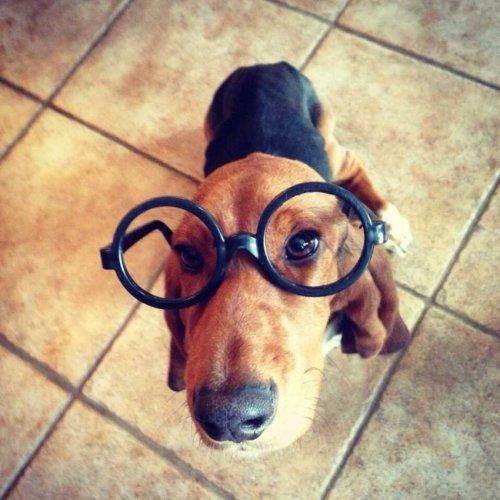 Милые и забавные собачки (40 фото)