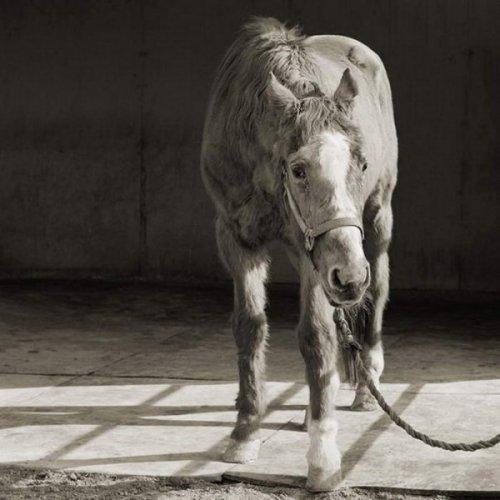 Животные в старости (10 фото)