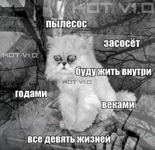 Юмор: Мысли домашнего кота
