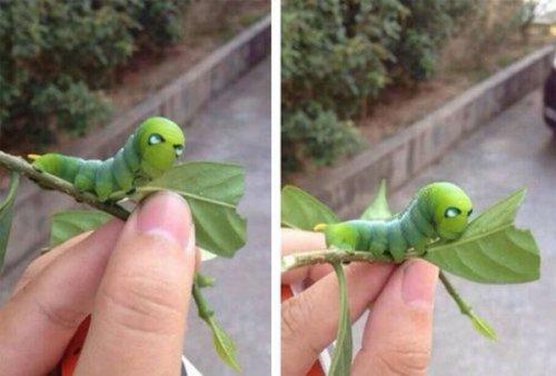 Найдена домашняя гусеница Тони Старка (2 фото)