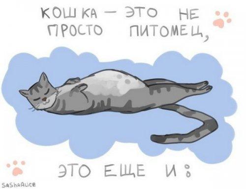 Юмор: О кошках (8 фото)