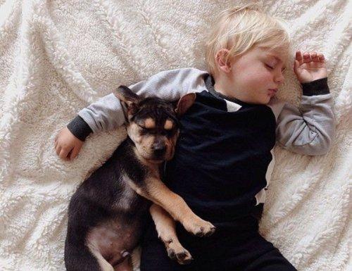 Самые милые сони на свете (10 фото)
