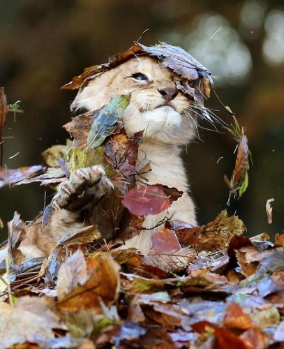 Осенний позитив (6 фото)