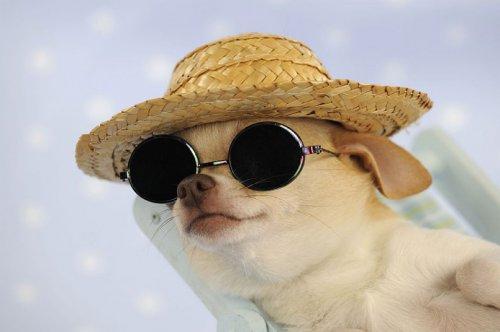 Собаки в шляпах (12 фото)