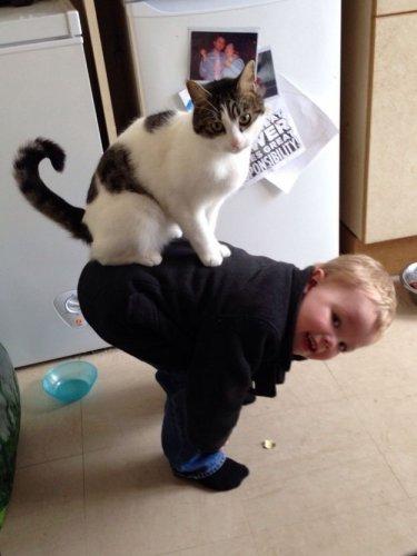 Преданные и любящие кошки (38 фото)