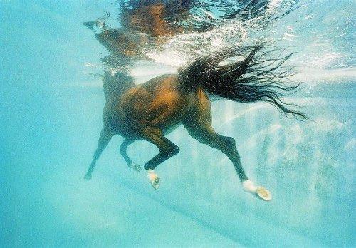 Экспрессивные фотографии лошадей в проекте Тима Флэка (23 фото)