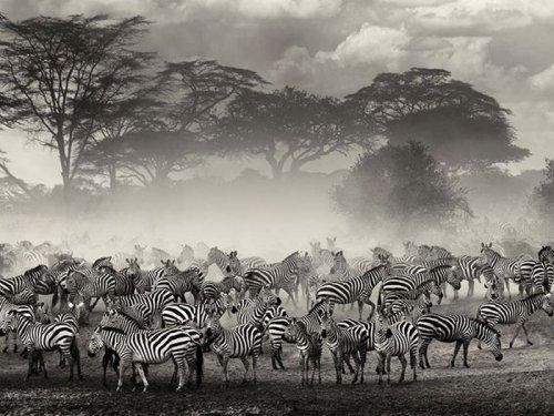 Дикая природа в фотографиях (33 фото)