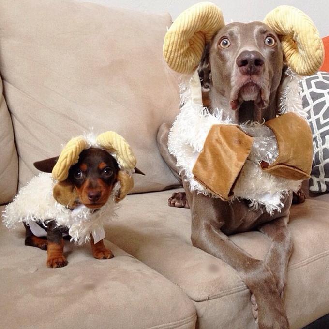 Благодарности поздравления, смешные картинки собак и их фото