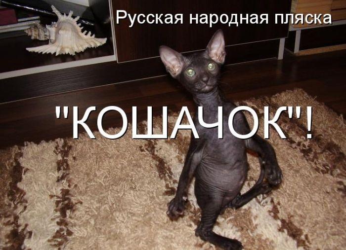 Смешные картинки с животными с подписью