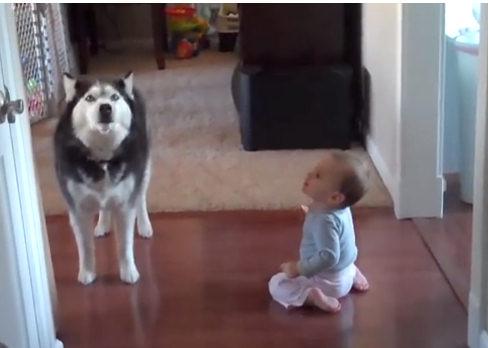 Собака подражает ребёнку