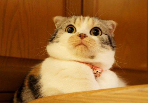 Почему кошки так импульсивны