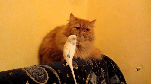 Юмор: Кот и попугай