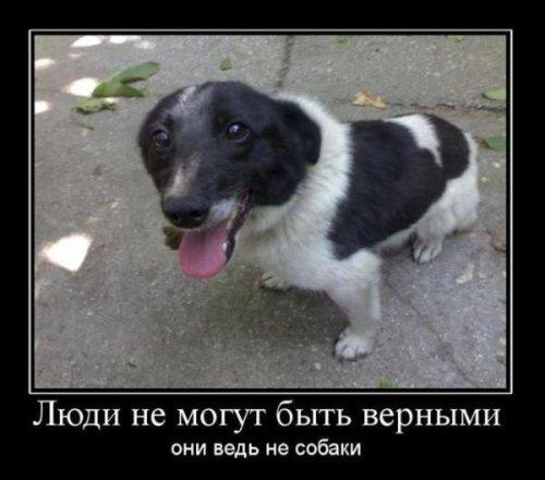 Демотиваторы о собаках (13 фото)