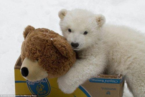 Британские СМИ собрали коллекцию лучших рождественских фото животных (19 фото)