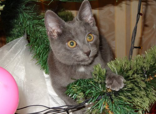 Новогодние котейки (20 фото)