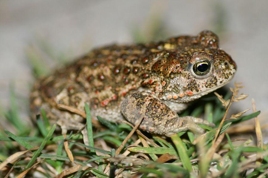 Фото лягушка жаба