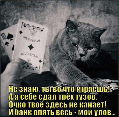 ЛОЛ котэ (35 фото)