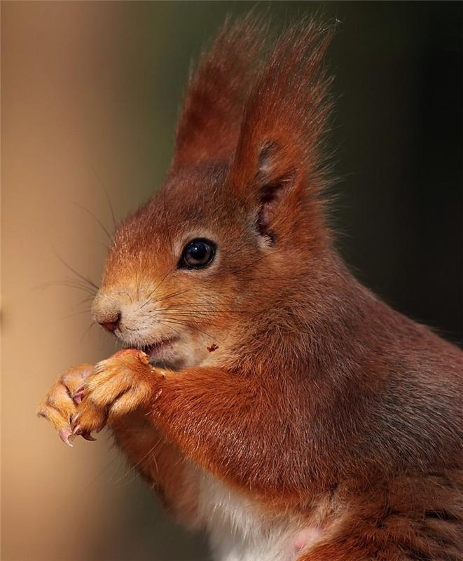 картинки животные прикольные белки продемонстрировали