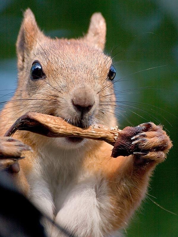Днем рождения, смешные картинки животных с белками