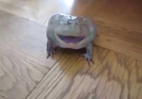 Смешная жаба