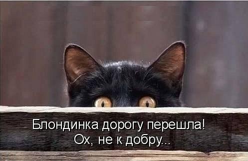 Юмор: Забавные котейки